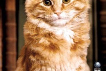 Livro Um Gato Entre Livros – Dewey