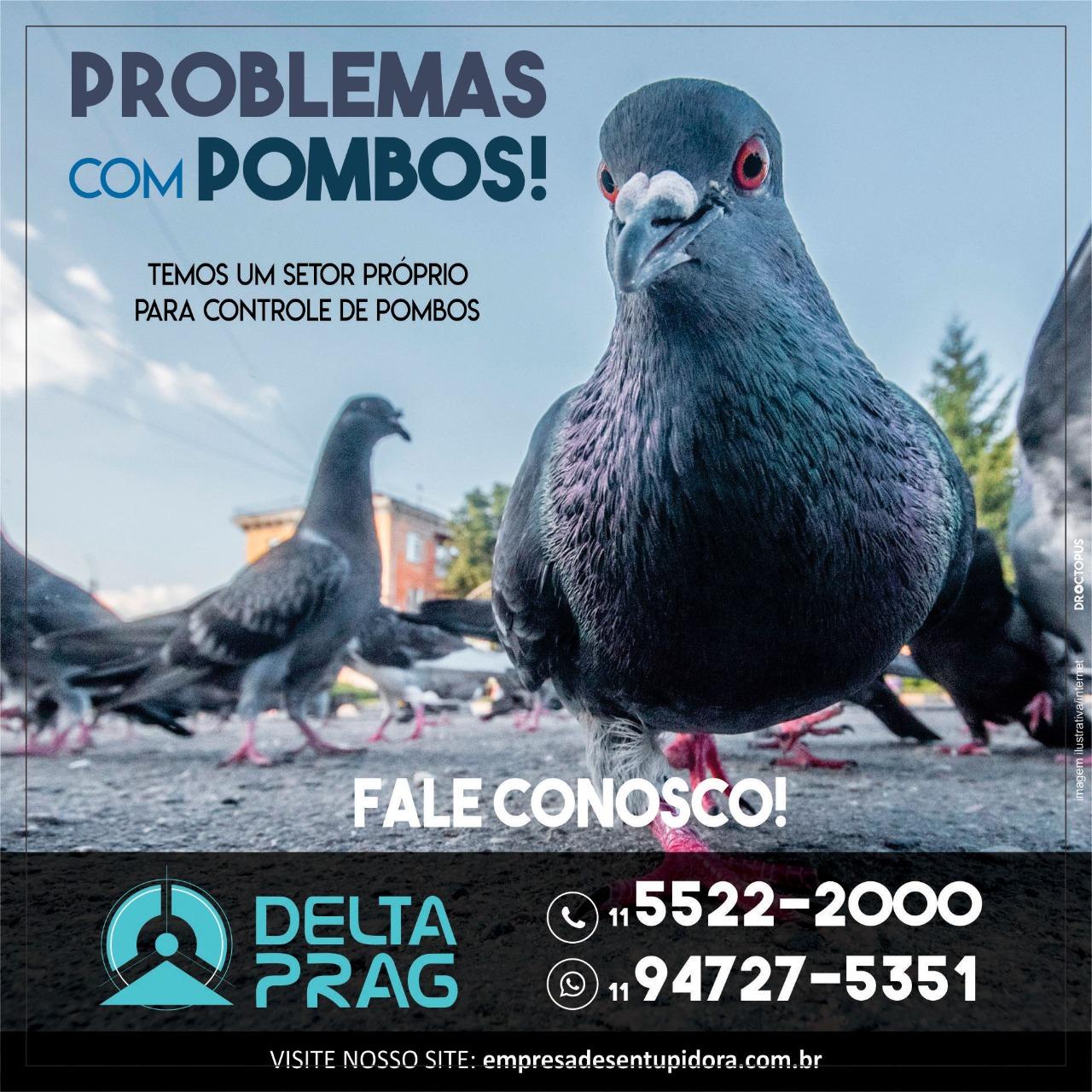 Controle de pragas em São Paulo – DeltaPrag